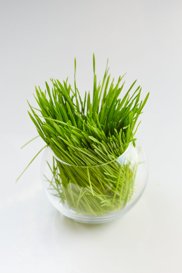 Ingredient Highlight: Organic Wheatgrass has a high chlorophyll content which breathes oxygen onto skin.